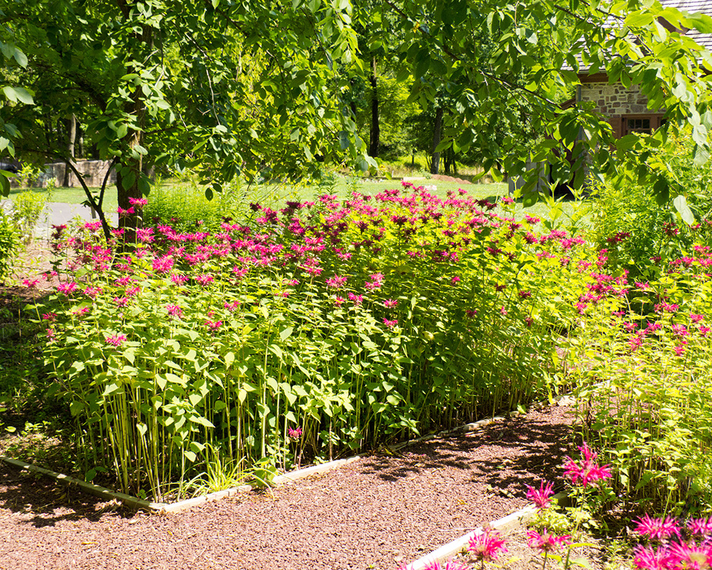 Garden of native plants moland house for Native plant garden designs